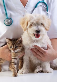 5-websites-compare-the-best-pet-insurance-policies